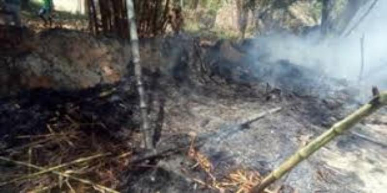 हाईटेंशन लाइन टूटने से खेत में खड़ी गन्ने की फसल जलकर राख